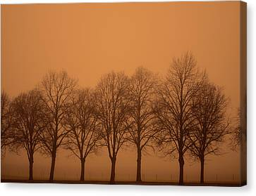 Beautiful Trees In The Fall Canvas Print by Toppart Sweden