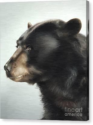 Black Bear Canvas Print by Aleksey Tugolukov