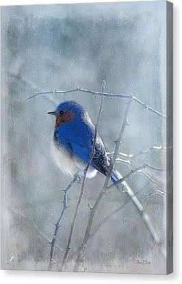Blue Bird  Canvas Print by Fran J Scott