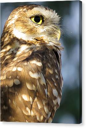 Burrowing Owl Canvas Print by Ed  Cheremet