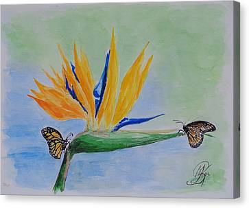 2 Butterflies On A Bird Of Paradise Canvas Print by Kerstin Berthold