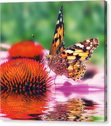 Butterfly Canvas Print by Angela Doelling AD DESIGN Photo and PhotoArt