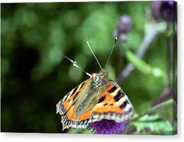 Butterfly Radar Tagging Canvas Print by Louise Murray