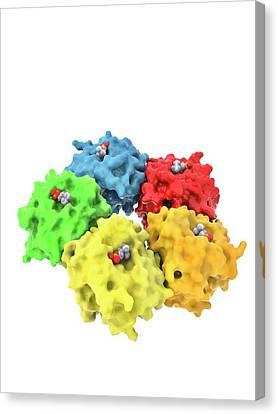 C-reactive Protein Molecule Canvas Print by Ramon Andrade 3dciencia