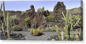 Cactus Garden, Lanzarote Canvas Print by Tony Craddock