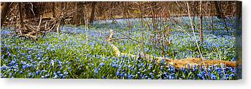 Carpet Of Blue Flowers In Spring Forest Canvas Print by Elena Elisseeva