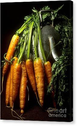 Carrots Canvas Print by Bernard Jaubert