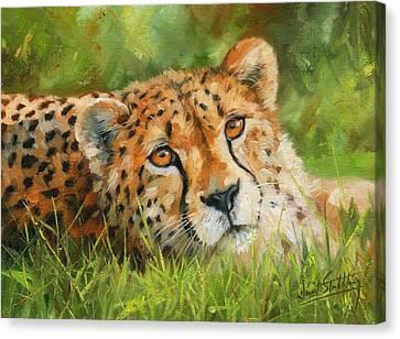 Cheetah Canvas Print by David Stribbling