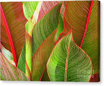 Colorful Leaves Canvas Print by Ranjini Kandasamy