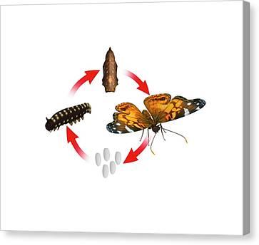 Complete Metamorphosis Canvas Print by Mikkel Juul Jensen