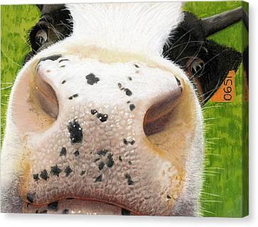 Cow No. 0651 Canvas Print by Carol McCarty
