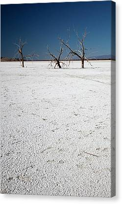 Dead Trees On Salt Flat Canvas Print by Jim West