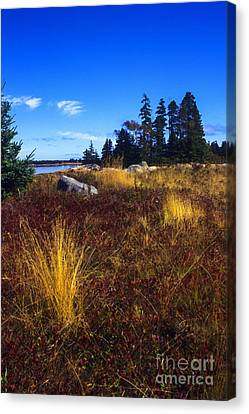 Deer Isle Maine Canvas Print by Thomas R Fletcher