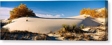 Desert Plants In A Desert, White Sands Canvas Print by Panoramic Images