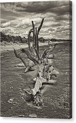Desolate Canvas Print by Marcia Colelli