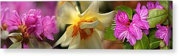 Details Of Flowers Canvas Print by Panoramic Images