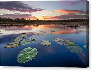 Everglades At Sunset Canvas Print by Debra and Dave Vanderlaan