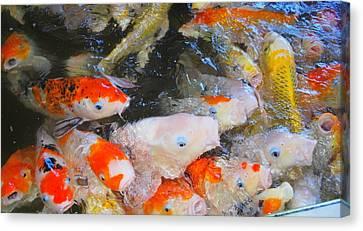 Fish Canvas Print by Tonyah Nichols