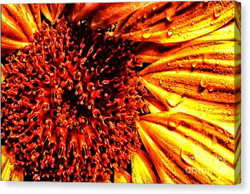 Flower Petals And Dewdrops Canvas Print by Thomas R Fletcher