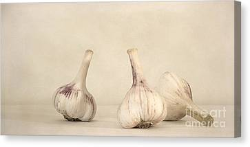 Fresh Garlic Canvas Print by Priska Wettstein