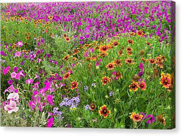 Garden Delight Canvas Print by Lynn Bauer