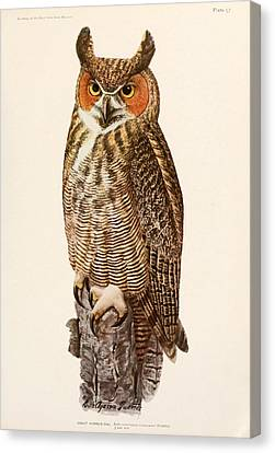 Great Horned Owl Canvas Print by Louis Agassiz Fuertes
