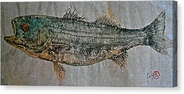 Gyotaku - Striped Bass - Rock Fish - Striper Canvas Print by Jeffrey Canha