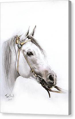 Horse Portrait Canvas Print by Tamer and Cindy Elsharouni