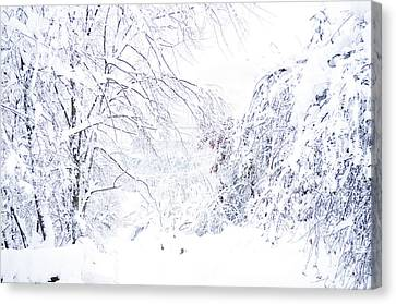 Hurricane Sandy Snow  Canvas Print by Thomas R Fletcher