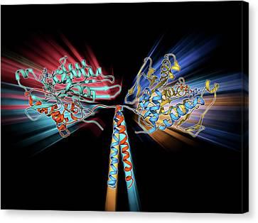 Kinesin Motor Protein Canvas Print by Laguna Design