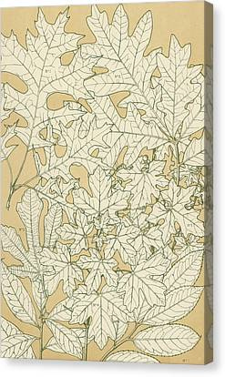 Leaves From Nature Canvas Print by English School