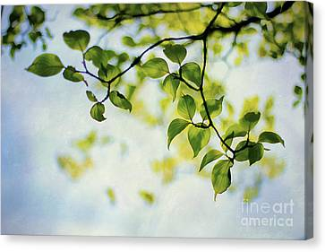 Looking Up Canvas Print by Darren Fisher