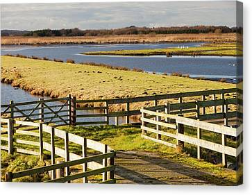 Martin Mere Bird Reserve Canvas Print by Ashley Cooper
