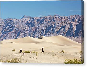 Mesquite Flat Sand Dunes Canvas Print by Ashley Cooper