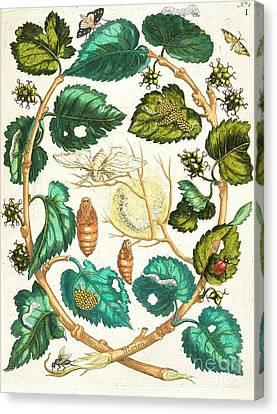 Metamorphosis Insectorum Canvas Print by Pg Reproductions