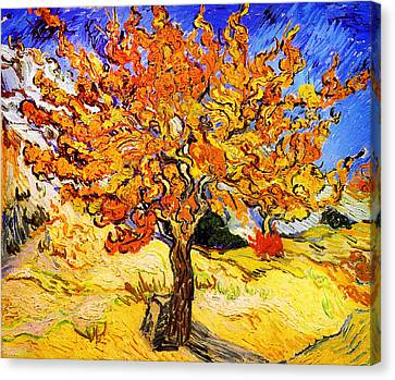 Mulberry Tree Canvas Print by Celestial Images