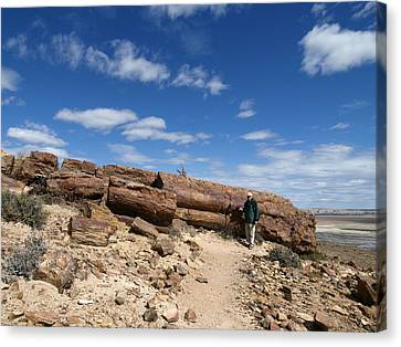 Petrified Forest, Argentina Canvas Print by Science Photo Library