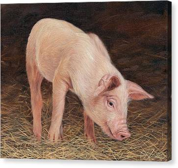 Pig Canvas Print by David Stribbling