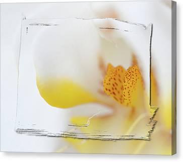 Pure White Canvas Print by Sebastian Musial