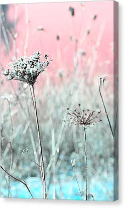 Queen Anne's Lace Canvas Print by Bonnie Bruno