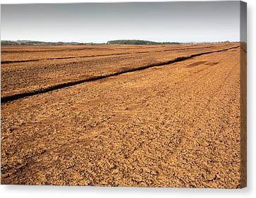 Raised Bog Being Harvested For Peat Canvas Print by Ashley Cooper