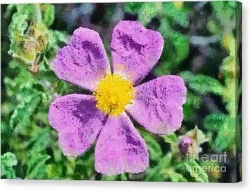 Rockrose Wild Flower Canvas Print by George Atsametakis