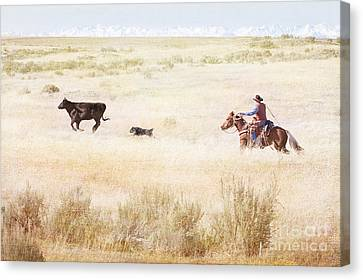 Round Up Canvas Print by Cindy Singleton