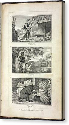 Scenes Of Industry Displayed In The Bee-h Canvas Print by British Library