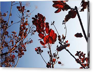 Shadows Canvas Print by Lucy D