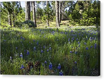 Simple Pleasures Canvas Print by Lynn Bauer