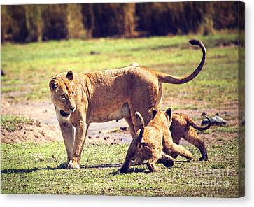 Small Lion Cubs With Mother. Tanzania Canvas Print by Michal Bednarek