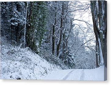 Snow Covered Road Passing Canvas Print by Panoramic Images