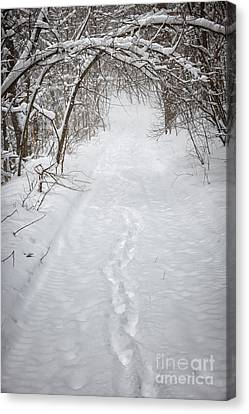 Snowy Winter Path In Forest Canvas Print by Elena Elisseeva
