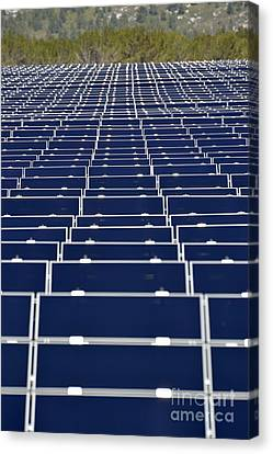 Solar Panels In Farm Canvas Print by Sami Sarkis